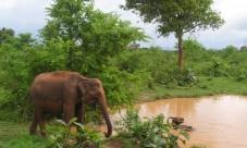 Séjour safari avec safarivo.com